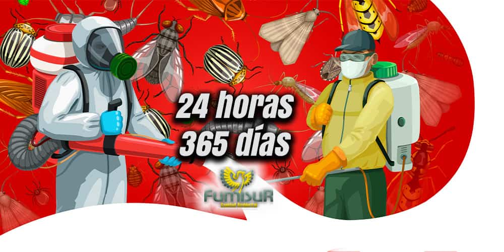 Empresa de control de plagas homologada 24h
