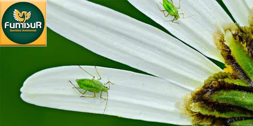 plagas mas comunes en primavera